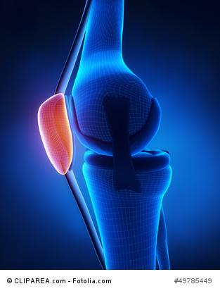 Knee patella anatomy
